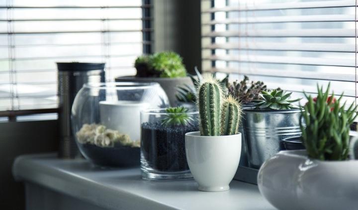 פריטים שווים לצמחים ועציצים שאפשר לקנות באליאקספרס